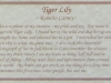 tiger-lily-description